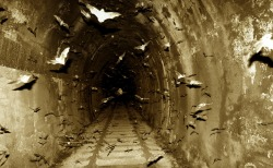 Bats in Tunnel